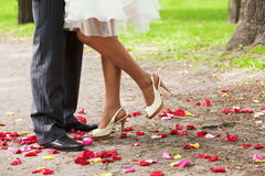 Legs over petals Stock Photography