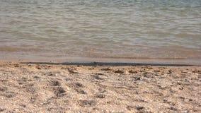 Legs of people walking along the beach. stock video