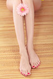 Legs with pink gerbera Royalty Free Stock Photography