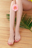 Legs with red gerbera Stock Images