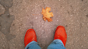 Legs in red shoes and autumn maple leaf on the road Stock Photos