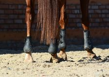 Legs of a sports horse. Equestrian sport in details. Legs of a red sports horse. Equestrian sport in details royalty free stock images