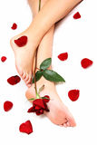 Legs and Rose stock photography
