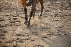 Legs of running horse Stock Image