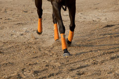 Legs of running horse. Running horse on sand field Stock Images