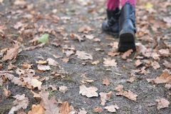 Shoes with leaves, needles, wood and cones background stock photos