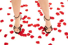 Legs with shoes on rose pedals Royalty Free Stock Images