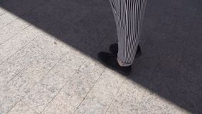 Legs go on the road. Legs in striped pants and black shoes stock video