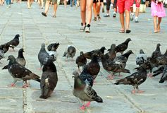 Legs in the summer and pigeons and doves Royalty Free Stock Images