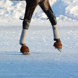 Legs of a trotter horse and horse harness. Details. Stock Photo