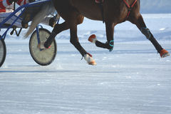 Legs of a trotter horse in motion. Horse racing. Details. Stock Photos