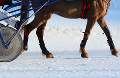 Legs of a trotter horse winter. Details. Stock Image
