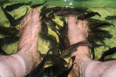 Legs under water fish spa Stock Image