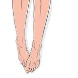 Legs. Legs vector illustration, female body Stock Images