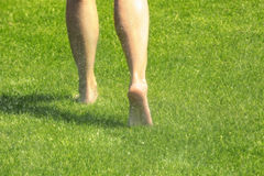 Legs on wet green grass Stock Photos