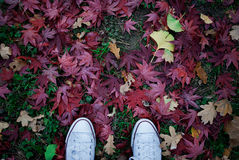 Legs in white gumshoes on green grass and red leaves Stock Images