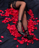 Legs of woman against petals of red roses Royalty Free Stock Images