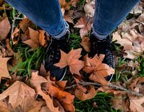 Legs of a woman walking in the autumnal maple leaf stock photo