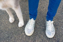 Legs of young woman and paws of her pet husky dog Royalty Free Stock Photography