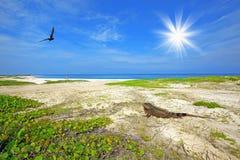 Leguaan op het strand Stock Foto's