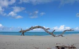 Leguaaneiland, Turken & Caicos Stock Foto