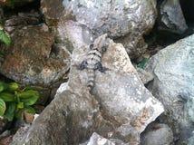 Leguan στο Μεξικό Στοκ εικόνες με δικαίωμα ελεύθερης χρήσης