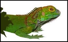 Leguan vektor abbildung