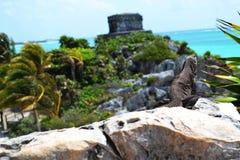 Leguan kam, sich im Hintergrund von Windy God Temple zu aalen, die den Eingang zum Buchtmeer von Tulum schützt Stockfotografie
