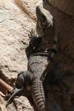 Leguanen på grå färger vaggar Arkivbild