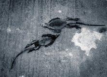 Leguaner som vilar i Santa Cruz galapagos öar i svartvitt Royaltyfri Fotografi