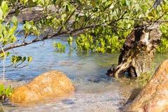Leguannest in Insel Cayo Leguan Lizenzfreie Stockbilder