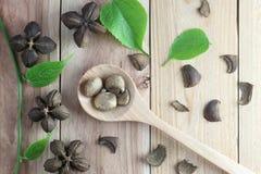 Legumbres del inchi de Sacha o del cacahuete del inca en el fondo de madera Imagenes de archivo
