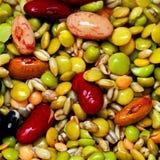 legume royaltyfri foto