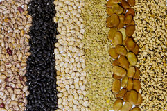 Legume. Beans, chickpeas , lentils and legume Stock Images
