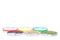 Legume with Wheat genetically modified, Plant Cell Stock Photography