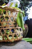 legumes frescos do unuse na cesta do lixo Imagens de Stock