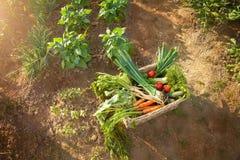 Legumes frescos na cesta Foto de Stock Royalty Free