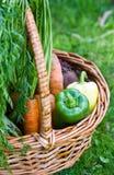 Legumes frescos na cesta Imagem de Stock Royalty Free