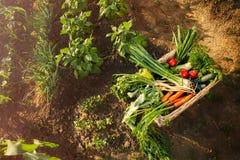 Legumes misturados na cesta Foto de Stock