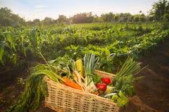 Legumes misturados na pilha de vime Imagem de Stock Royalty Free