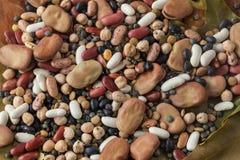 Legumes na liść Zdjęcia Stock