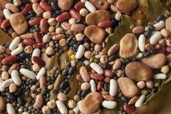 Legumes na liść Obrazy Stock