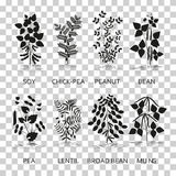 Legumes plants with leaves, pods and flowers. Silhouette icons with reflection on transparent background. Vector illustration Stock Images