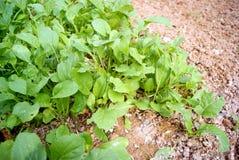 Legumes verdes Fotografia de Stock Royalty Free