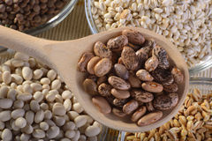 Legumes. A wooden spoon of Borlotti beans with glass bowls of lentils spelt and barley Stock Images
