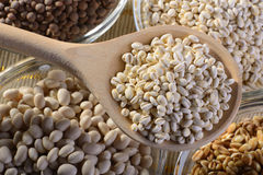 Cereals. A wooden spoon of spelt with bowls of lentils Borlotti beans and barley Stock Photo