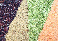 Leguminous. Grasses of lentils, peas and haricots Stock Photos