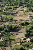 Leh市绿色山谷视图,印度 免版税库存照片