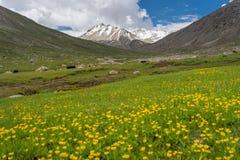 Leh美好的风景在夏天, Leh,拉达克,查谟克什米尔, 免版税库存照片