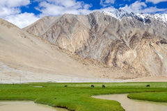 Leh district, India Royalty Free Stock Images